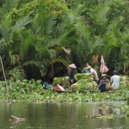 Vietnam - Mekong Delta IMG_6048.JPG