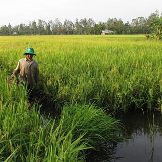 Vietnam - Thuan Hung IMG_1267.JPG