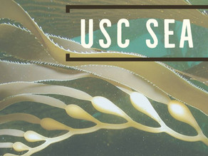 Internship Opportunity: Community Engaged Intern with USC Sea Grant