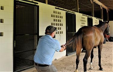 Dirk Hambloch treating horse