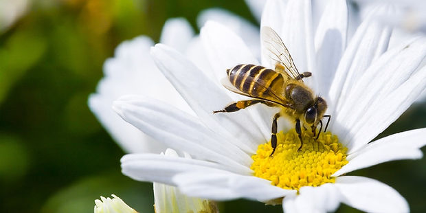 bee-on-flower.resize.jpg