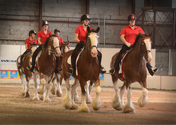 draft horse show.png