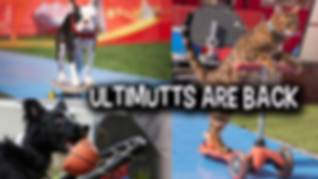Ultimutts for web.png
