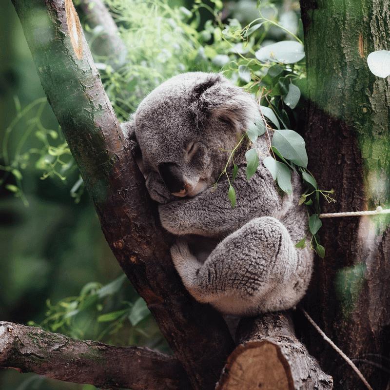Hulp en mindfulness oefeningen bij slaapproblemen
