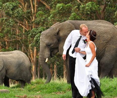 knsyna-elephant-park-wedding-celebrations-590x390.jpg