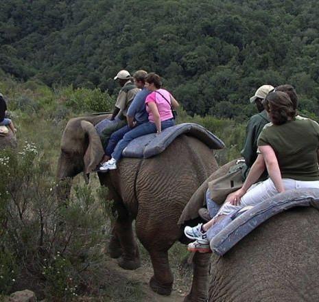 knysna_elephants_ride.jpg