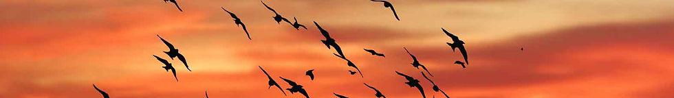 flock-of-birds-against-sunset-1349066.jp
