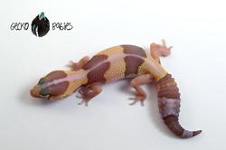 ID# 21F-223 Female 8g