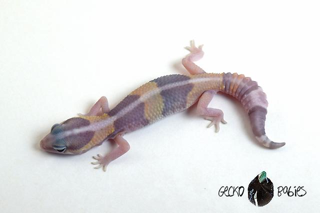 ID# 20F-305 Male 13g