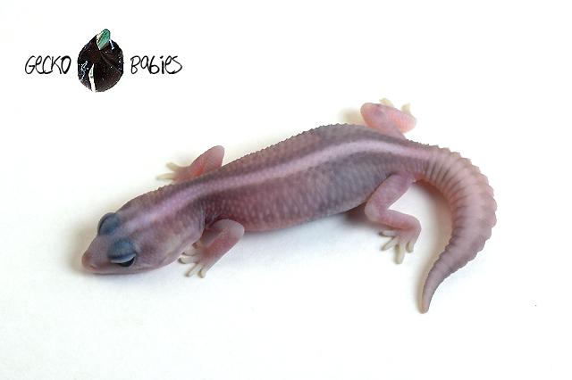 ID# 20F-324 Male 10g