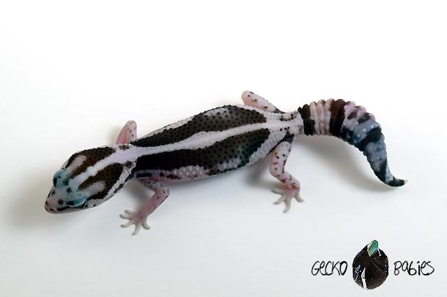 ID# 21F-004 Female 13g