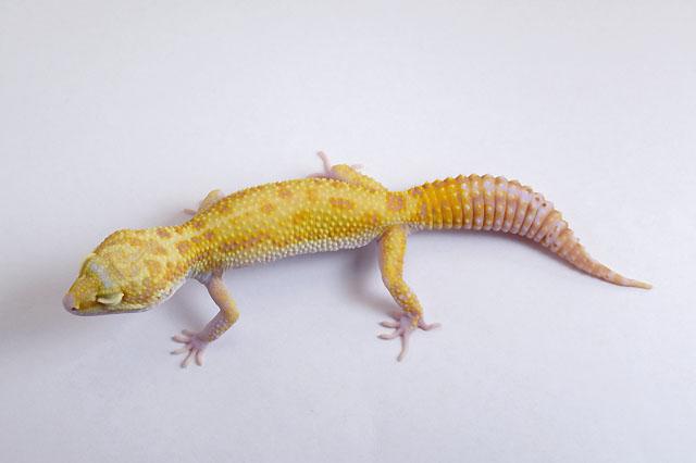 19L-013 Male 45g