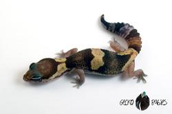 ID# 21F-156 Male 15g
