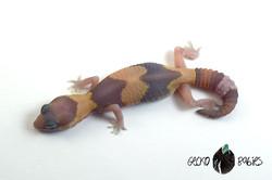 ID# 21F-251 Female 8g
