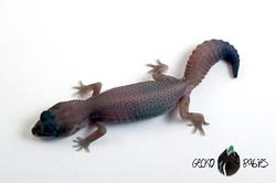 ID# 21F-468 Male 11g