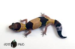 ID# 21F-380 Female 7g