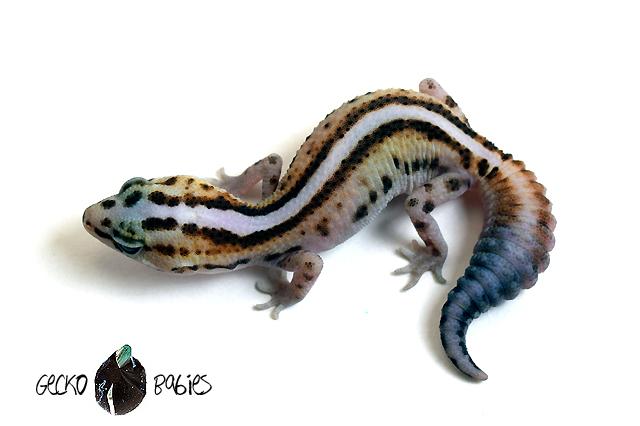 ID# 20F-423 Female 9g