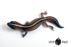 ID# 21F-219 Female 13g