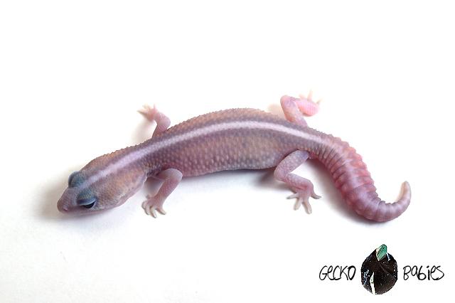 ID# 20F-400 Male 11g