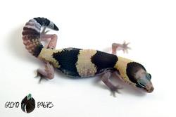 ID# 21F-193 Female 15g