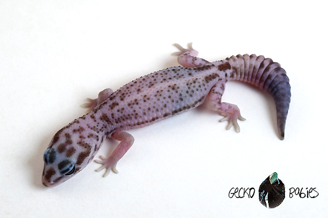 ID# 20F-368 Male 9g