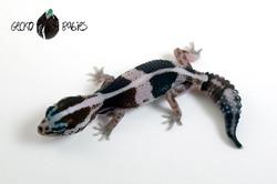 ID# 21F-307 Female 6g