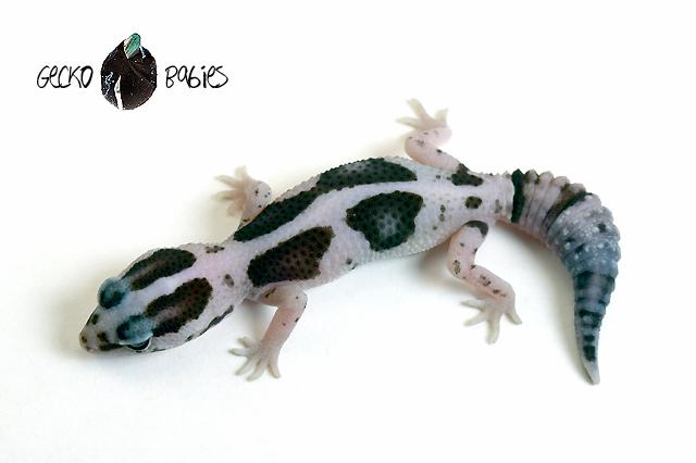 ID# 20F-395 Female 6g