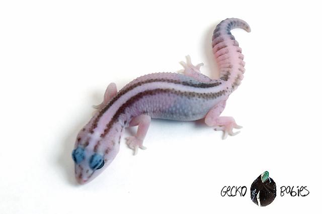 ID# 20F-350 Female 7g