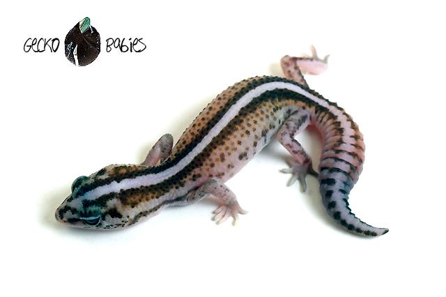 ID# 20F-356 Female 10g