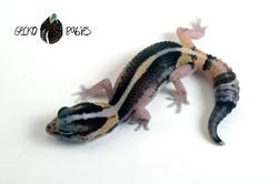 ID# 21F-342 Female 7g