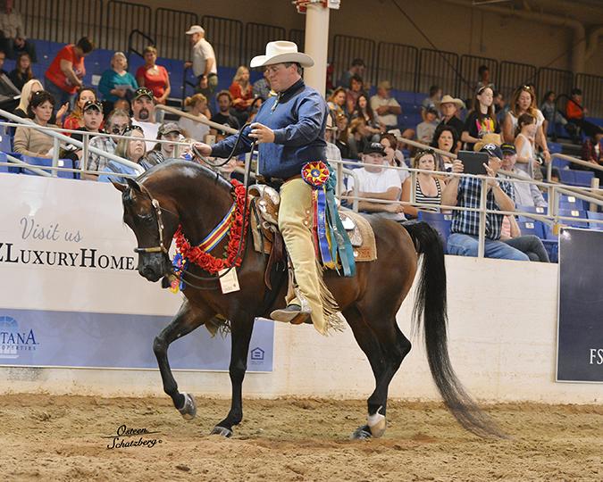 Scottsdale Arabian Horse Show 2014