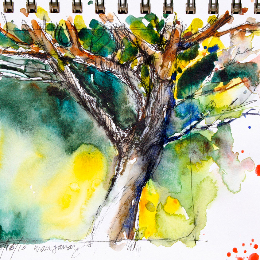 I did a quick pen and ink sketch of this tree.
