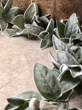 Lamb's Ear Garland