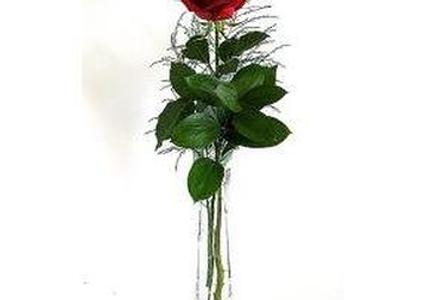 Single Rose in Bud Vase