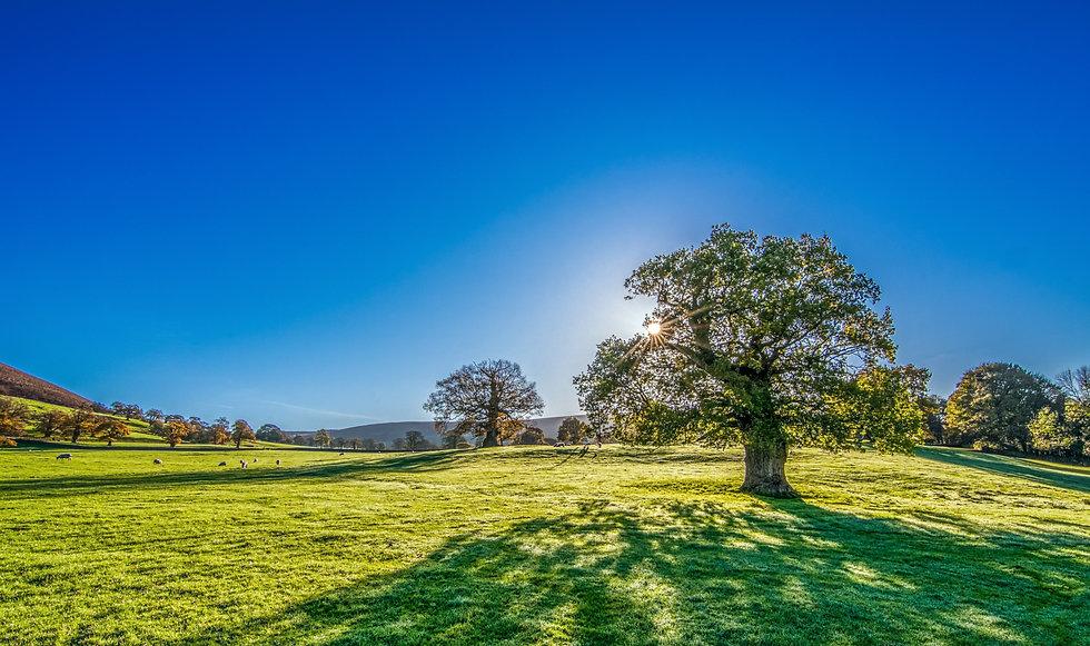 tree-2916763.jpg