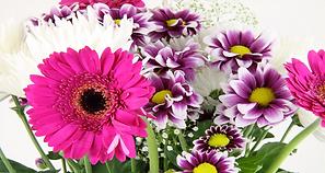 Floral 2.png