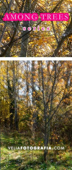 Among_trees_Autumn_sunny_days_2_cop.jpg