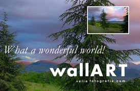 velia_fotografia_what_a_wonderful_world_