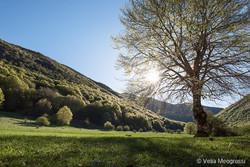 Seasons - IV - Spring
