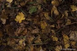 Autumn - The sound of colours - XXIX