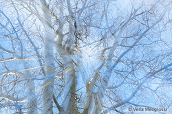 Winter branches - XI
