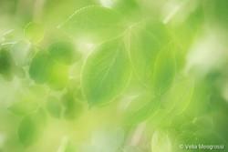 Spring - The sound of colours - V