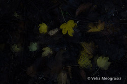 Autumn - The sound of colours - LXIX