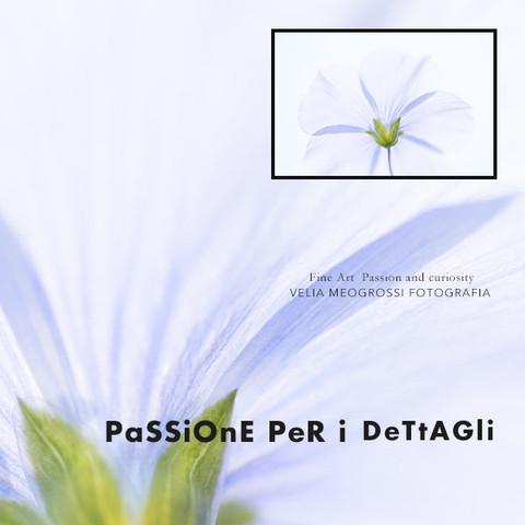 print_flowers_III.jpg