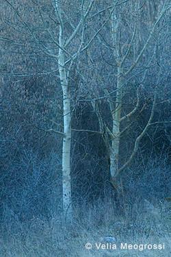 Among trees - XXIV