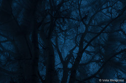 Winter branches - IV