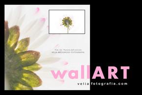 velia_fotografia_wall_art_daisy.jpg