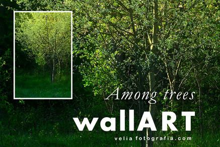 print_among_trees_07.jpg