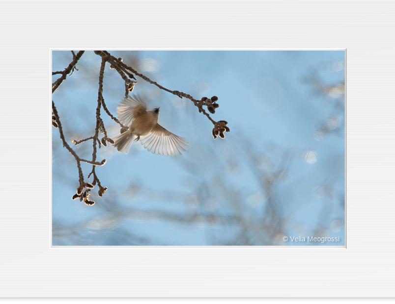 Open wings - IV