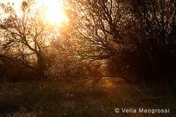 Among trees - XXVI